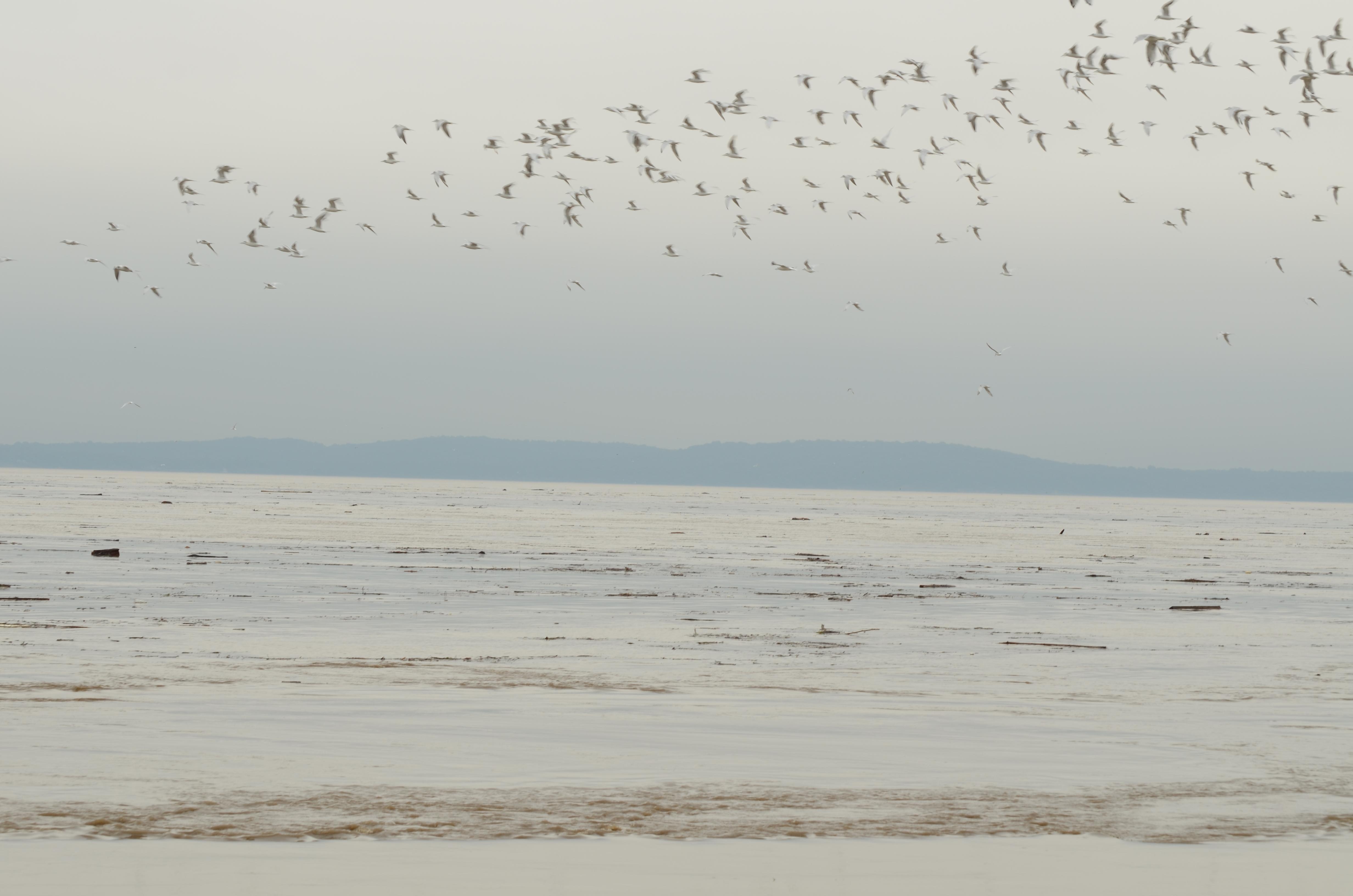 view летний поход совёнка серия 11 вып 1